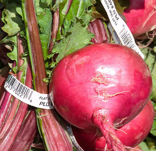 Beets Picture
